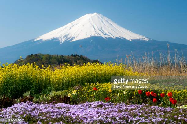 spring flowers and fuji - fuji hakone izu national park stock photos and pictures