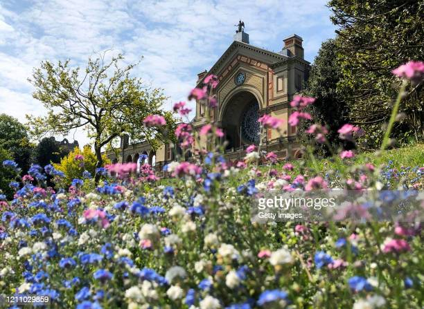 Spring flowers are seen in front of Alexandra Palace on April 26, 2020 in London, England. The British government has extended the lockdown...