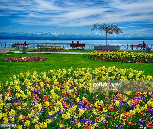 spring flowers at lake neuchatel, switzerland - ヌーシャテル ストックフォトと画像
