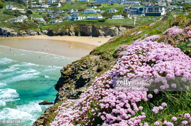 Spring Flowers At Mawgan Porth In Cornwall England Uk