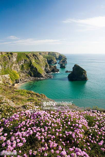 spring flowers at the bedruthan steps, cornwall, england. - david cliff stock pictures, royalty-free photos & images