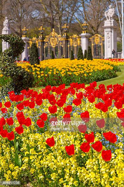 Spring flowers at the front of Buckingham Palace