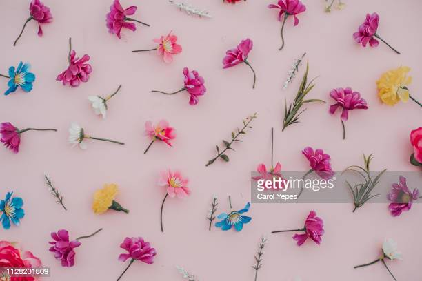 spring flowers background in pink.flat lay - march month stock pictures, royalty-free photos & images
