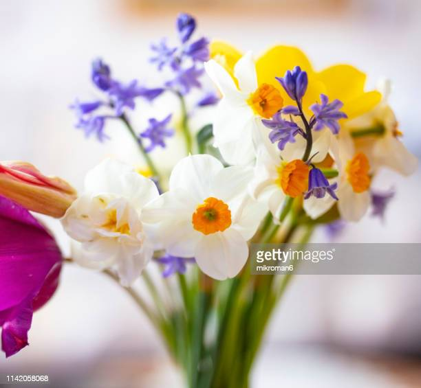 spring flowers bouquet - tulips and daffodils stock pictures, royalty-free photos & images