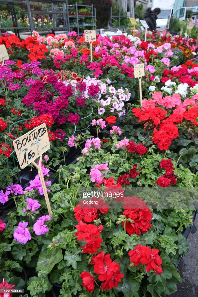 Spring Flowers For Sale At The Sunday Morning Market France News