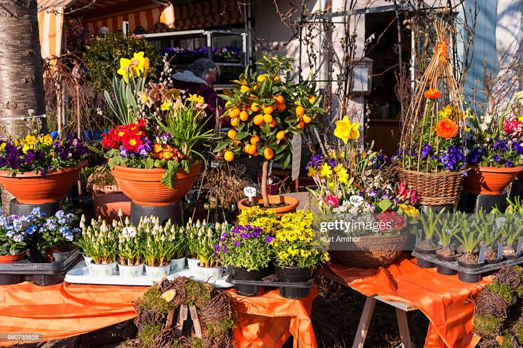 Spring Flowers For Sale In A Nursery Munich Bavaria Germany Stock