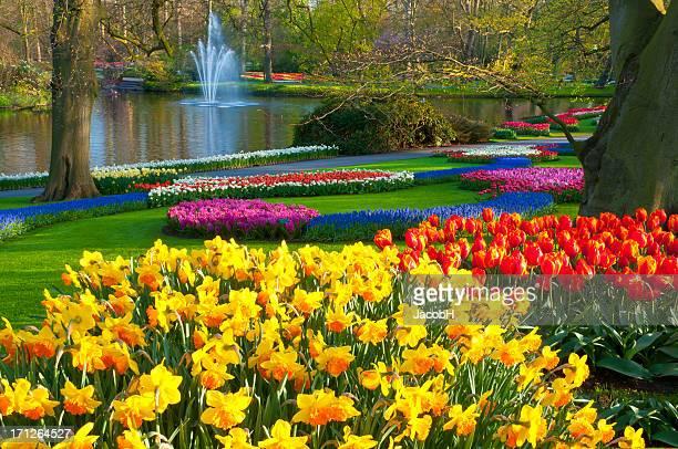Frühling Blumen im Park