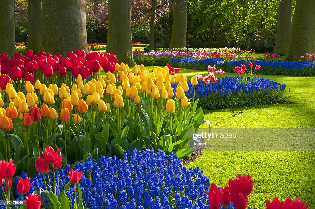 Spring Flowers in a Park : Stockfoto