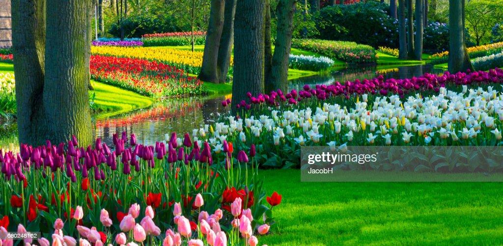 公園の春の花。 : ストックフォト