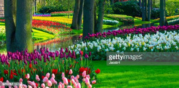 Spring Flowers in a park.