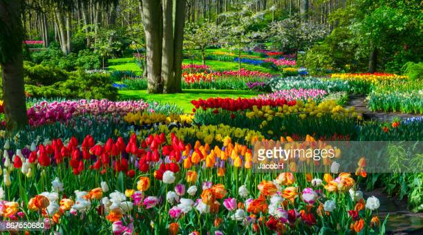 spring flowers in a park - flowerbed stock pictures, royalty-free photos & images