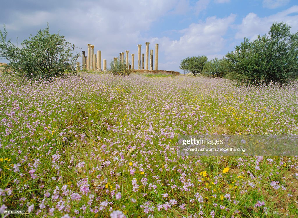 Spring flowers in foreground and columns of the 7th/8th century basilica at ancient Abila, a city of the Roman 'Decapolis', north of Irbid, Jordan : Foto de stock