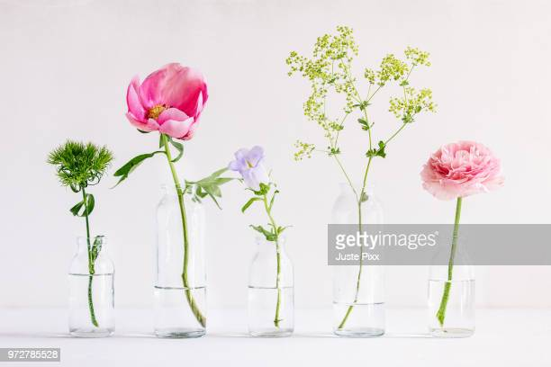 spring flowers in glass vases - bloem stockfoto's en -beelden