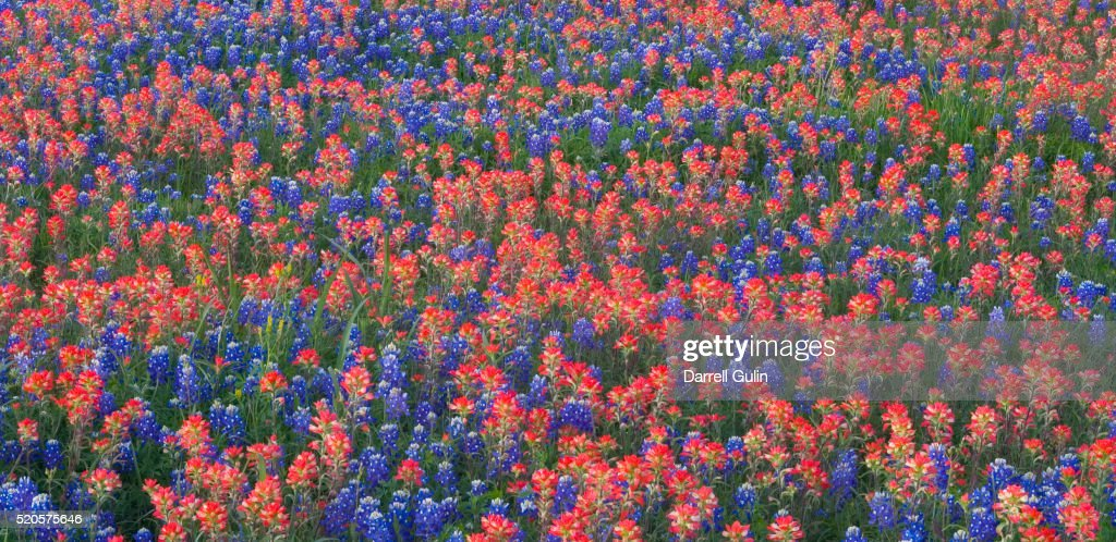 Spring Flowers In Texas Hill Country Stock Photo Getty Images