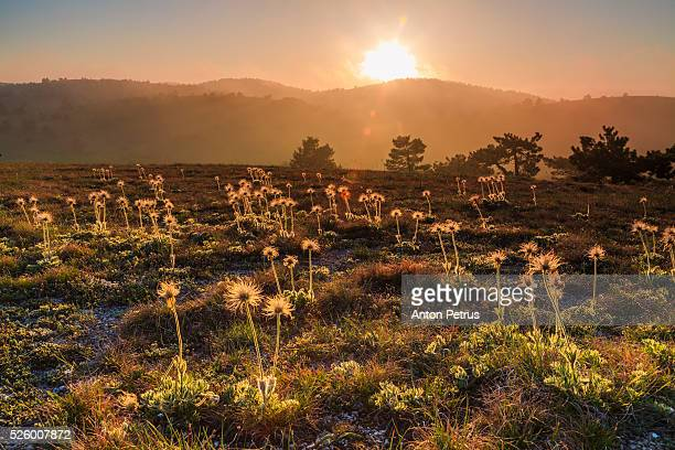 spring flowers in the mountains - anton petrus panorama of beautiful sunrise stock pictures, royalty-free photos & images
