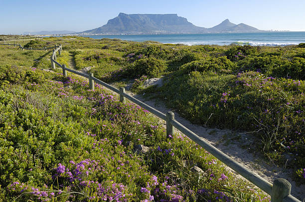 Spring flowers on coastal walk at sunset beach, Cape Town, Western Cape Province, South Africa