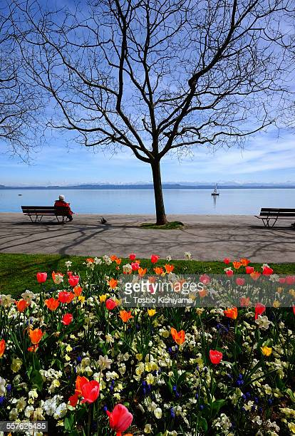 spring flowers on lake neuchatel, switzerland - ヌーシャテル ストックフォトと画像