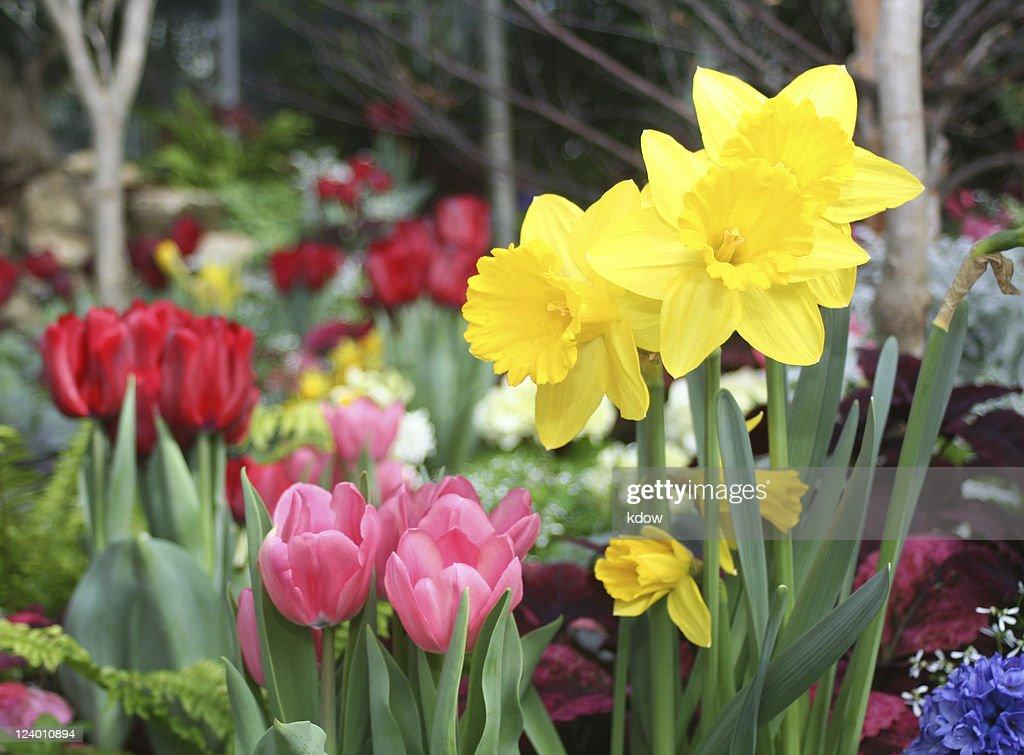Spring Flowers : Stock Photo