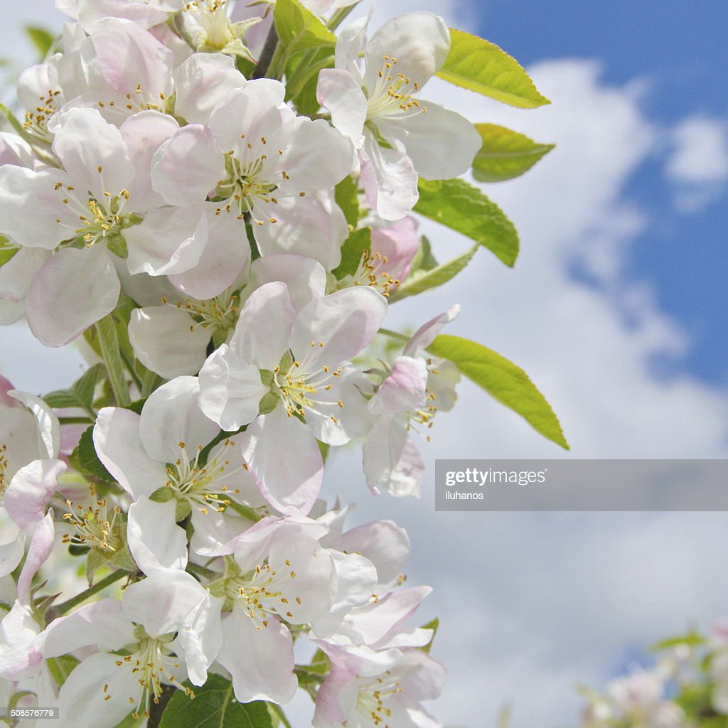 spring flowers : Stock Photo