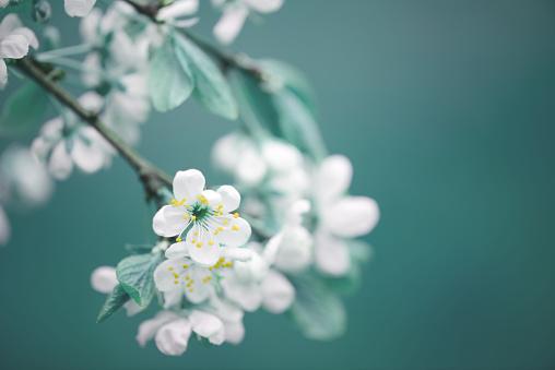 spring flowers 925762364