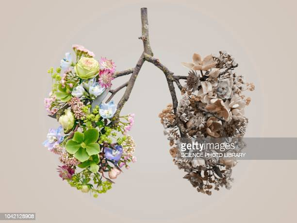 spring flowers representing human lungs - asthmatic stock photos and pictures