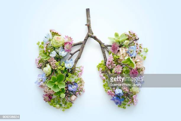 spring flowers representing human lungs - lung stock pictures, royalty-free photos & images