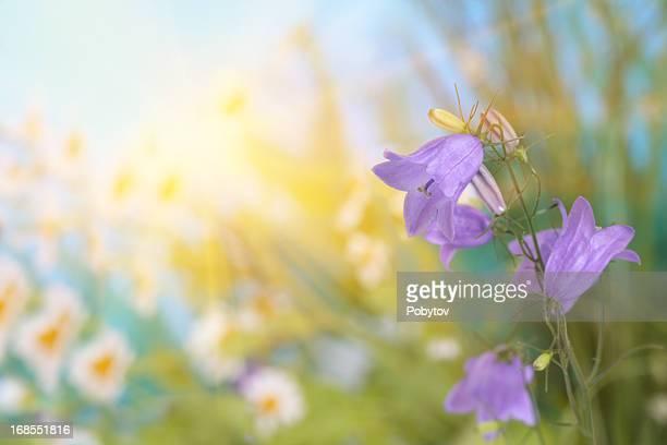 Spring Flowers Sunlit