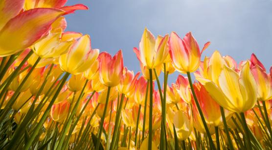 Spring Flowers - Vernal Equinox 121565751