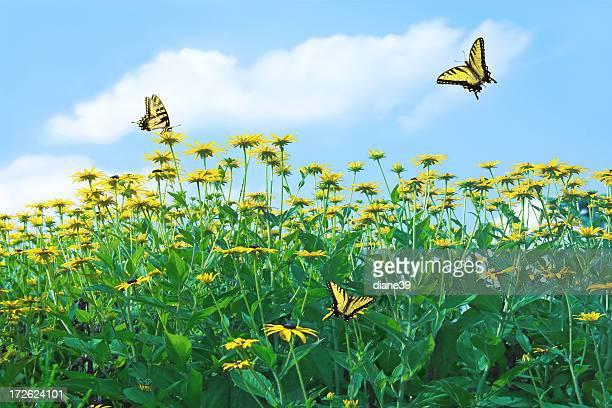 Frühling Blumen mit Schmetterlingen