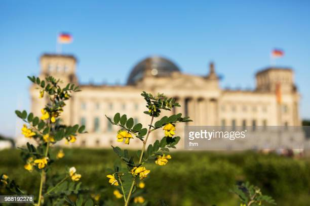 Spring flowers with the Reichstag building (german parliament building) - Berlin, Germany