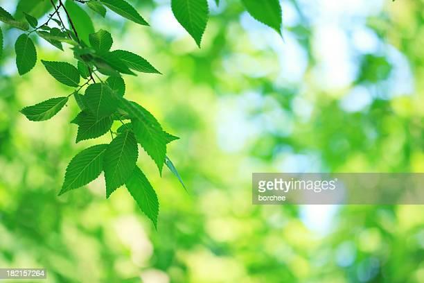 Frühling Grün