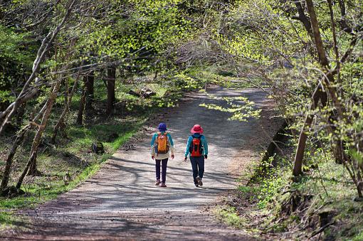 Spring Forest Hiking - gettyimageskorea