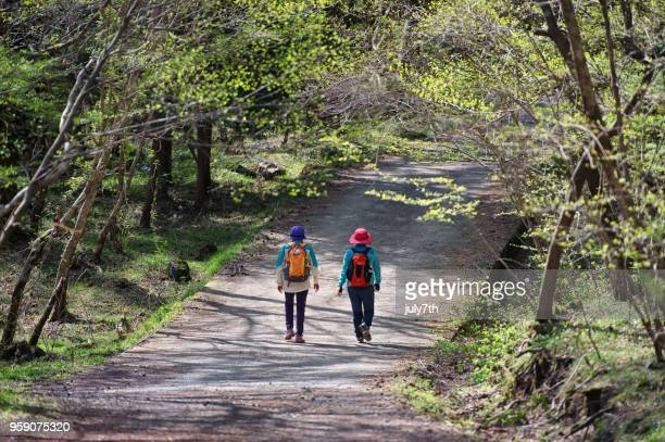 spring forest hiking - jeju stock photos and pictures