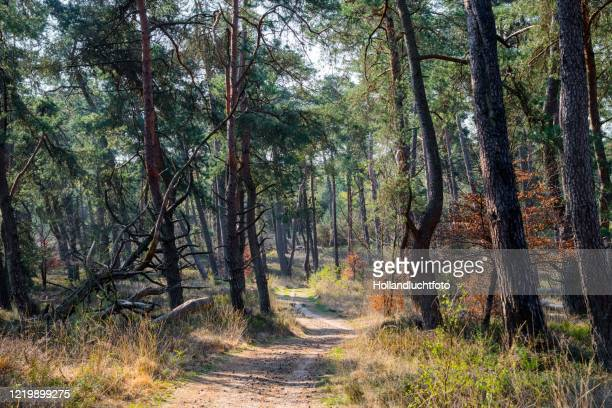spring forest in the 'crown domain', a nature reserve on the veluwe in the middle of the netherlands. - nature reserve stockfoto's en -beelden