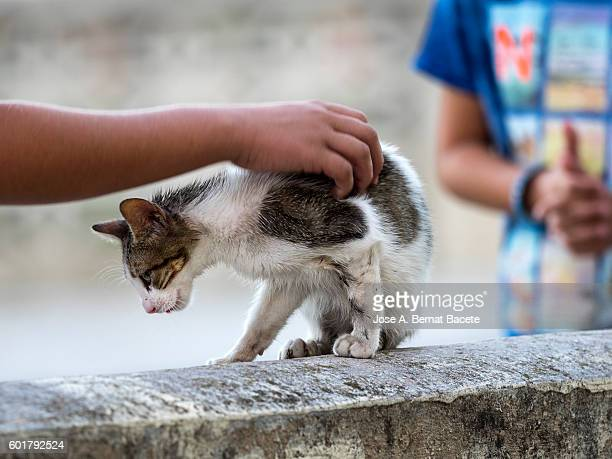 I spring from a child caressing the body of a street cat in the street