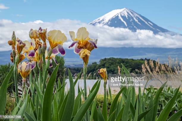 spring fuji and flowers - bearded iris stock pictures, royalty-free photos & images