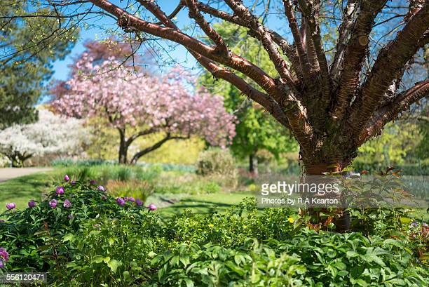 spring garden - sheffield stock pictures, royalty-free photos & images