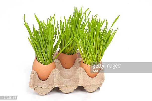Spring Grass in Brown Egg Shells