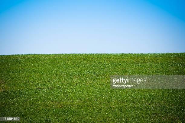 Spring grass landascape
