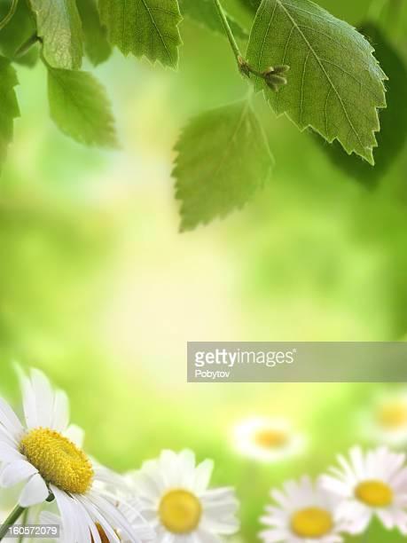 Frühling Grün Hintergrund