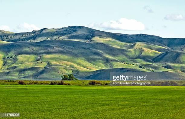 Spring green hills