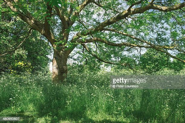 spring green - peter lourenco stock-fotos und bilder