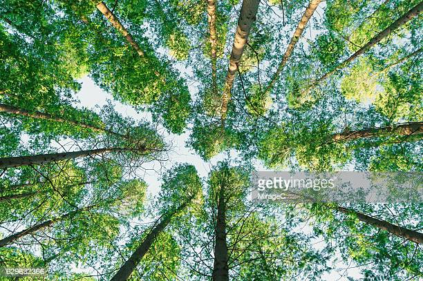 spring greenery trees - below stock pictures, royalty-free photos & images