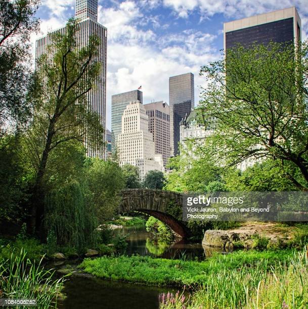 spring greens and gapstow bridge at central park, new york city - central park stock pictures, royalty-free photos & images