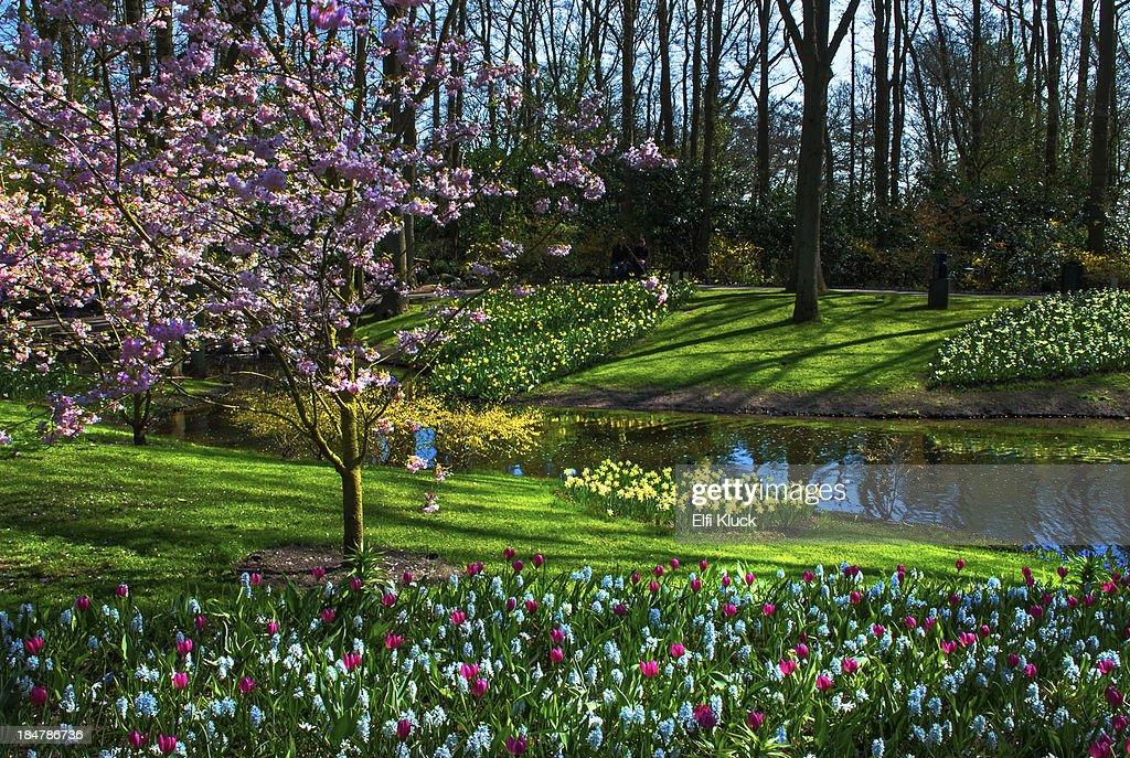 Spring has arrived at Keukenhof  Gardens : ストックフォト