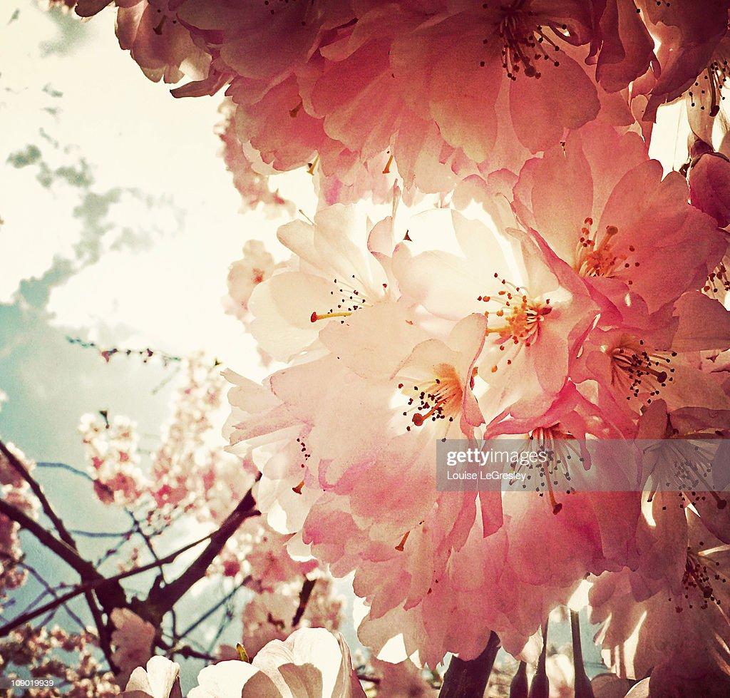 _ spring has sprung _ : Stock Photo