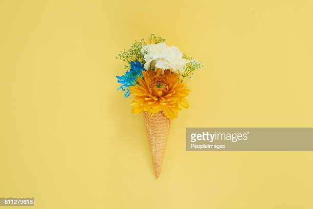 spring has sprung - cone shape stock photos and pictures