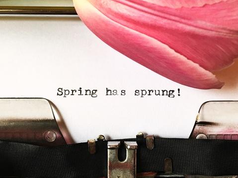 Spring has sprung! Text typewritten on white paper on vintage manual typewriter 959768432