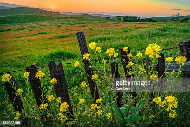 spring hills sunset - don smith stockfoto's en -beelden