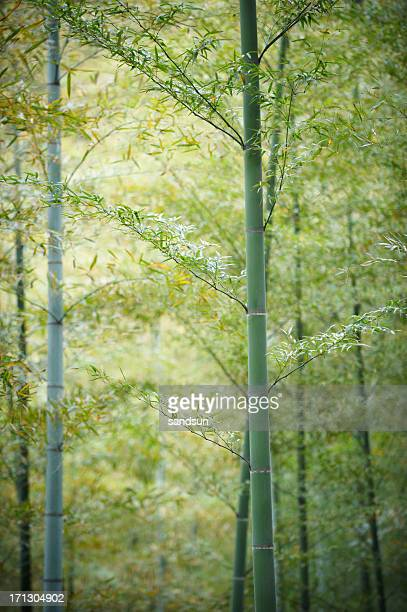 spring in bamboo forest